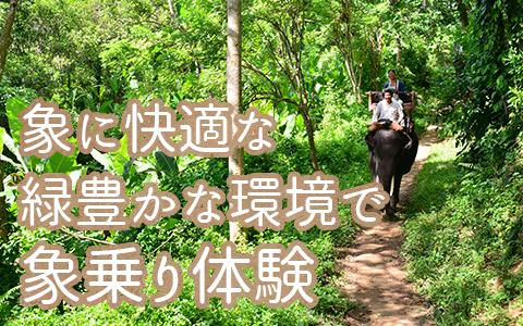 バリ島 厳選動物ふれあい エレファントキャンプ