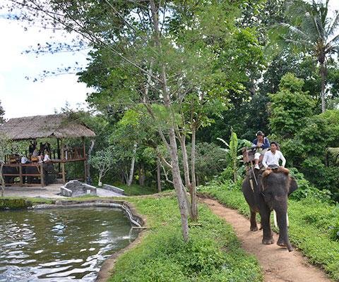 大自然の景色の中で象乗り体験