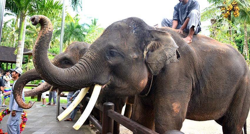 記念撮影や象とのふれあいも体験できます