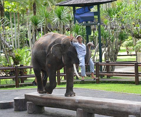 象のショーを楽しめます