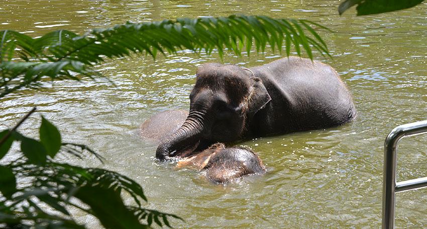 自然に近い環境で象が生活