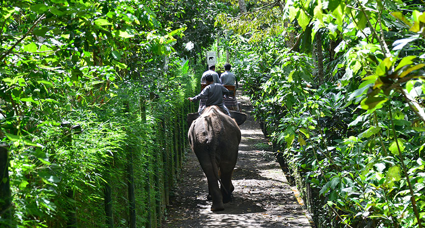 パーク内の熱帯植物の景色を眺めて楽しめます
