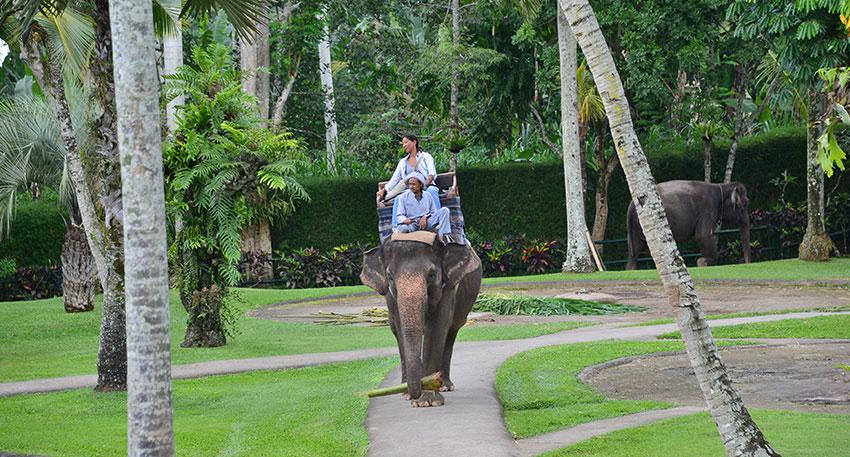 バリ島らしい清々しい景色が広がります