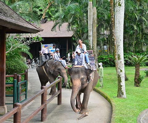 象乗りを30分楽しめます