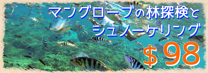 バリ島 厳選レンボンガン島 マングローブ林自然探検とシュノーケリングツアー 特徴