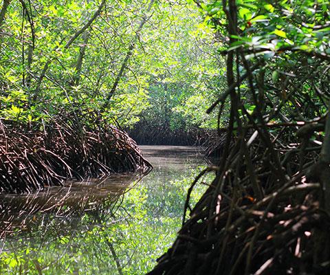 レンボンガン島の癒しの景色