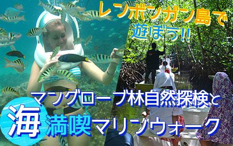 バリ島 厳選レンボンガン島 マングローブ林とお魚とサンゴ礁の世界を海中散歩「マリンウォーク・海中写真1枚付き」ツアー