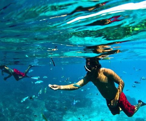 シュノーケリングを美しい海でお楽しみください