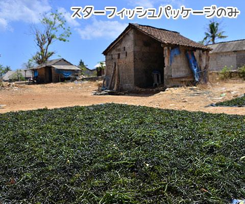 レンボンガン島は天草の栽培が盛んです