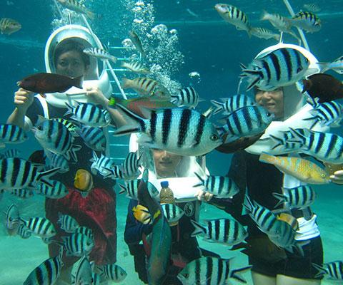 レンボンガン島の海で熱帯魚を観察