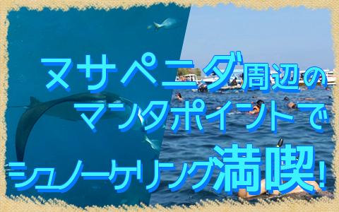 バリ島 厳選レンボンガン島 感動の出会い マンタポイントでマンタと一緒にシュノーケリング 特徴