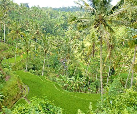 バリ島の文化を感じられる世界遺産を巡るツアー