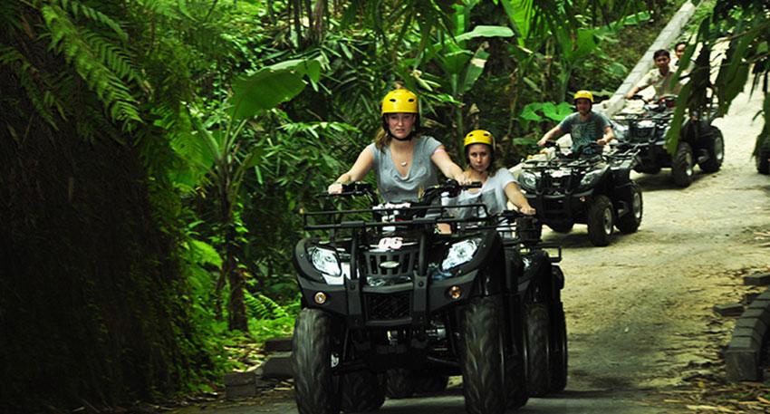緑いっぱいのジャングルを通ります