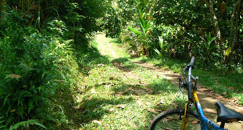 美しい景色を眺めながらサイクリング