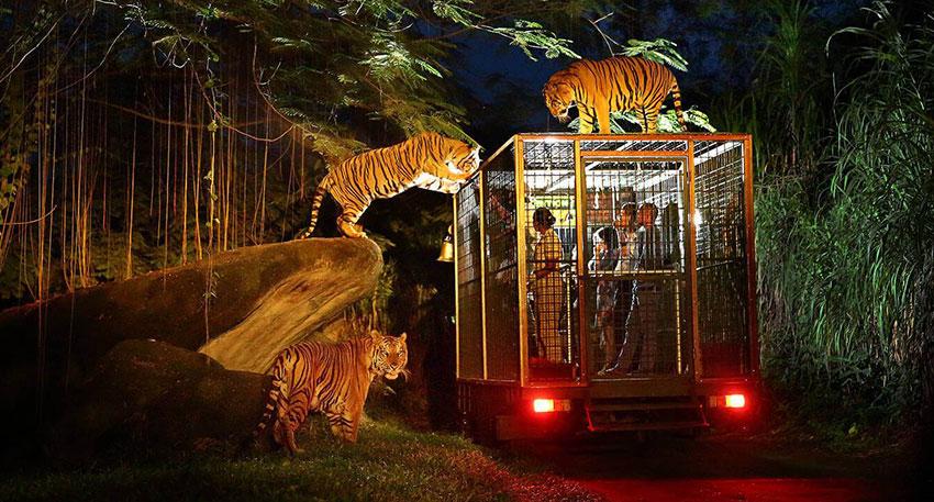 近くまで動物たちがやってきます