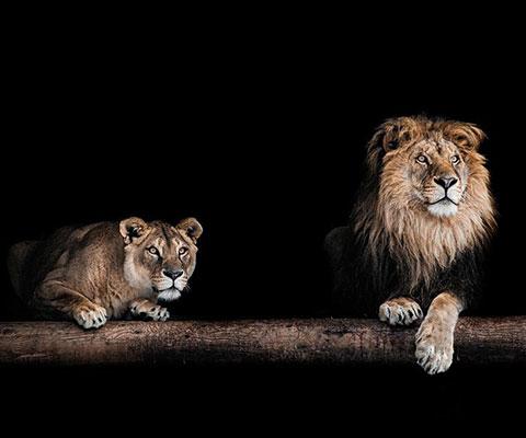 百獣の王ライオンももちろんいます
