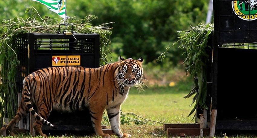 野生と変わらない環境の中に動物たちが暮らしています