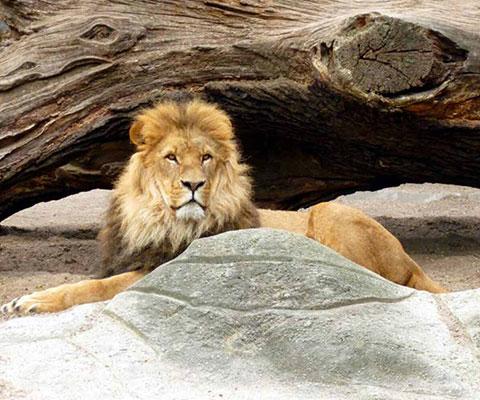 大きな動物も間近で見ることができるのもポイント