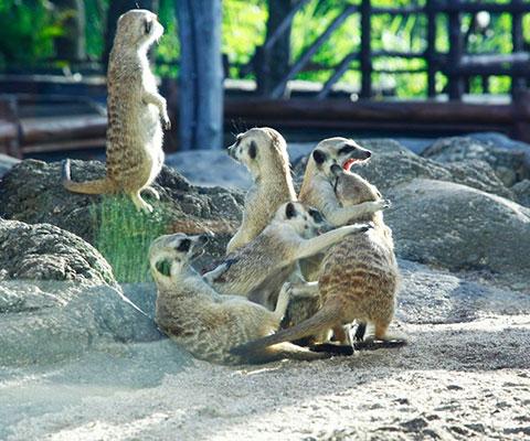 様々な種類の動物を自然の状態で観察できます