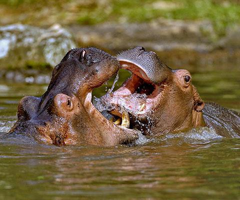 広大な敷地にたくさんの動物たちが暮らすサファリパーク