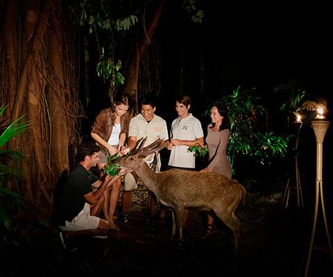 バリ動物園(バリズー) 昼とはまた違う雰囲気の夜の動物園