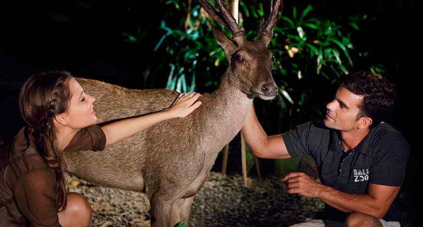 バリ動物園(バリズー) 夜行性の動物が活発になります