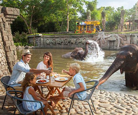 バリ動物園(バリズー) 象の水浴びプール前の特設会場