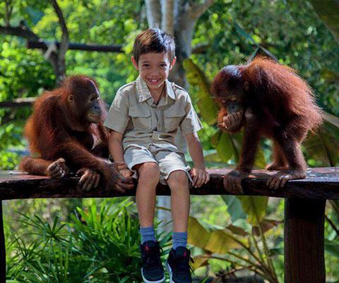 バリ動物園(バリズー) かわいらしいオランウータンの子供と触れ合えます