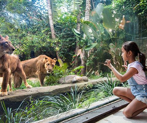 バリ動物園(バリズー) ライオンも近くで見ることが出来ます