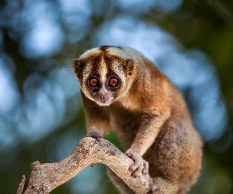 バリ動物園(バリズー) かわいらしい動物に出会えます