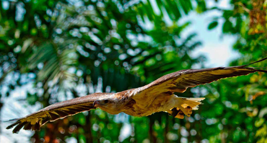 バリ動物園(バリズー) 動物たちを間近で見られます