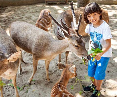 バリ動物園(バリズー) エサあげ体験もできます
