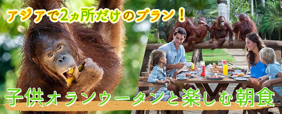 バリ島 子供オランウータンと楽しむ朝食付き限定プラン