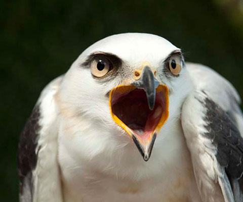 鳥のパークを楽しみましょう