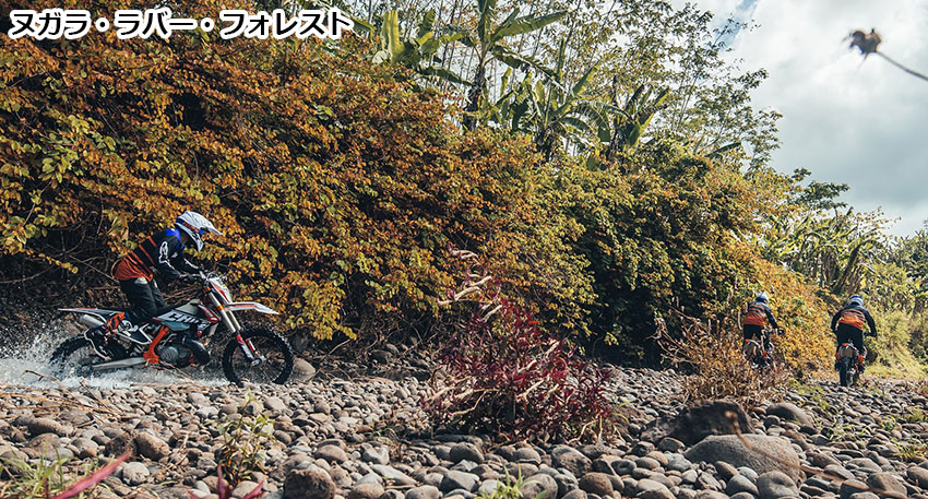 ヌガラ・ラバー・フォレスト3