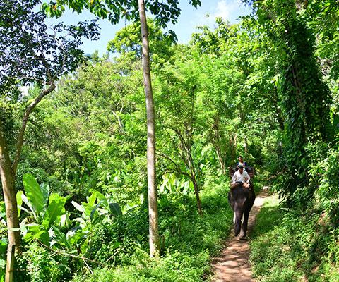 バリ島の大自然の中をゆっくりと象と散歩します