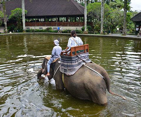 最後は象が池に入ります