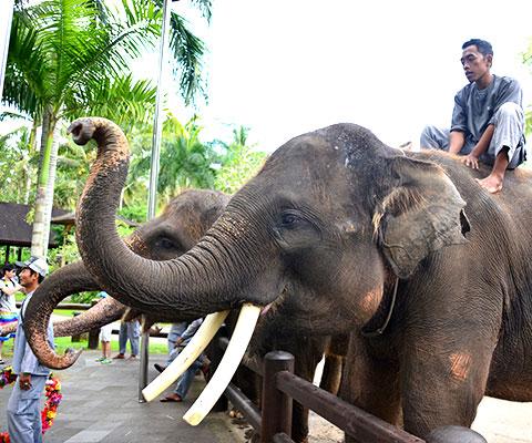 象とのふれあいや記念撮影も体験できます