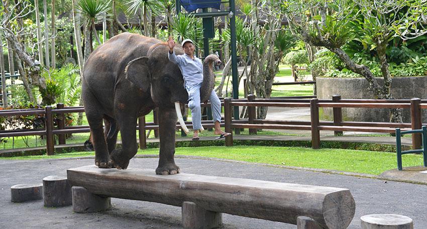 芸達者な象のショーを楽しみましょう