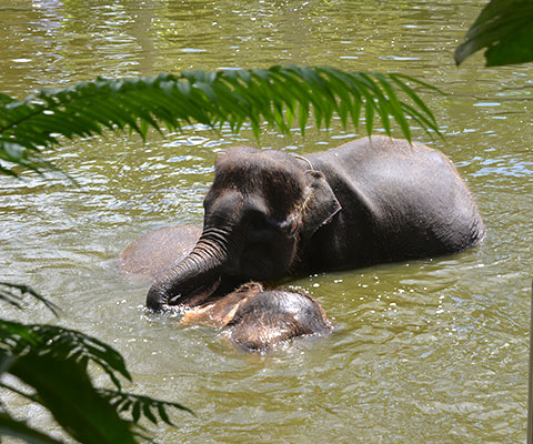 象の暮らしやすい自然に近い環境