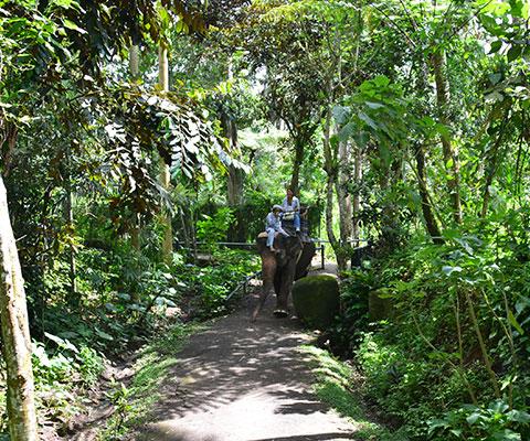 ジャングルのような熱帯植物が生い茂ったパーク内