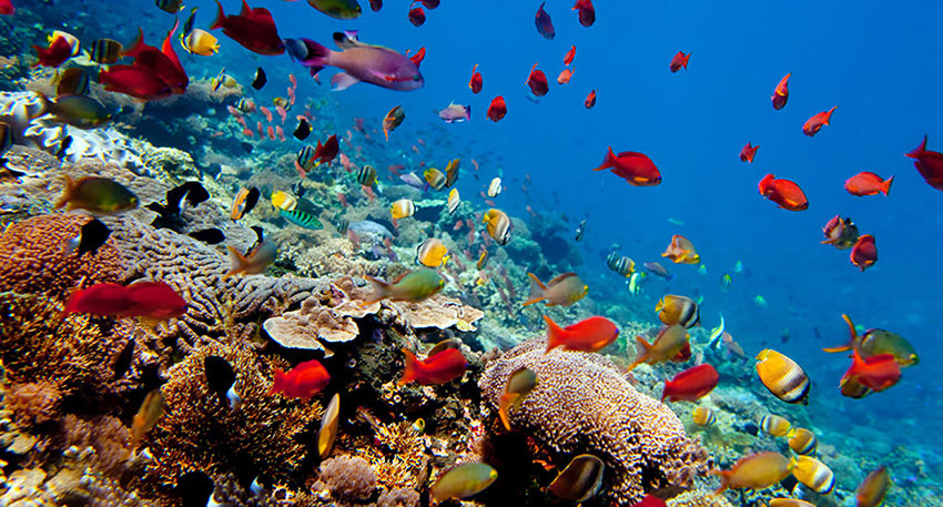 美しい海の世界を観察