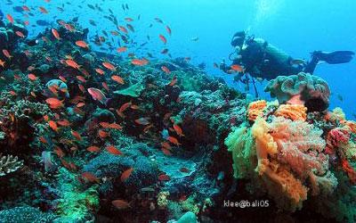バリ島 ダイビング 画像