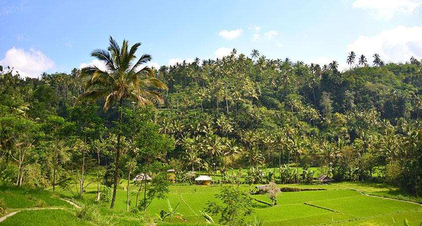 バリジャングルアドベンチャーパーク