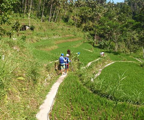 バリ島の自然を感じられるエリアです