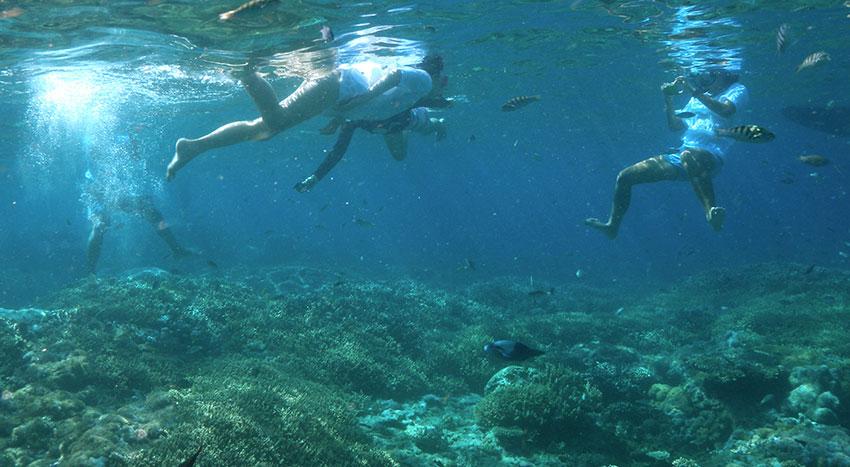 色鮮やかな魚やサンゴ礁を見ることが出来ます