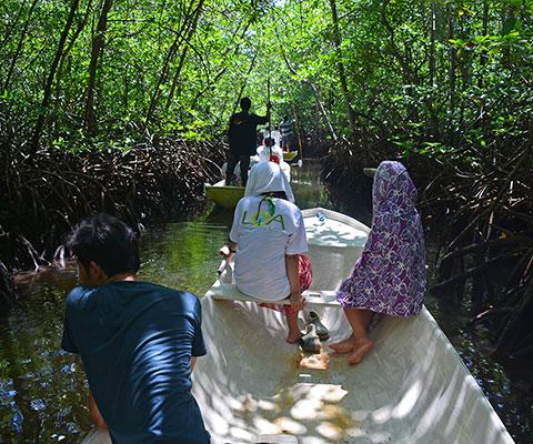 手漕ぎ小舟でマングローブの林を探検します