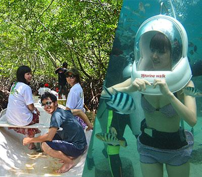 バリ島 マングローブ林自然探検とマリンウォーク 画像