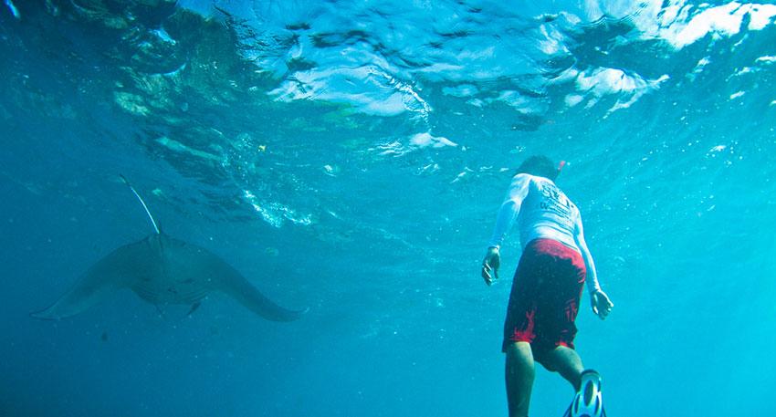 マンタに会えたらゆっくりと一緒に泳ぎましょう