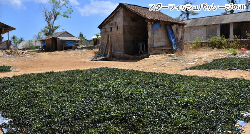 天草の栽培が盛んなレンボンガン島